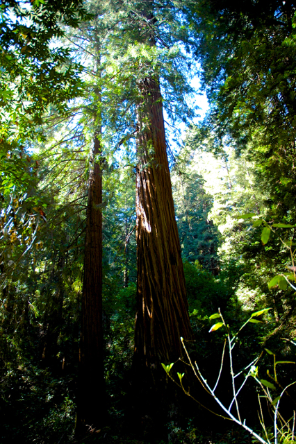 God, Me and Redwoods (1/2)